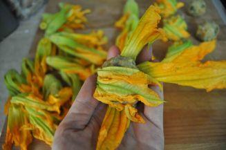 fagottini di fiori di zucca (10)