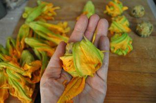 fagottini di fiori di zucca (11)