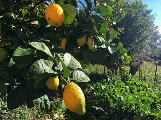 delizia al limone sal de riso (19)