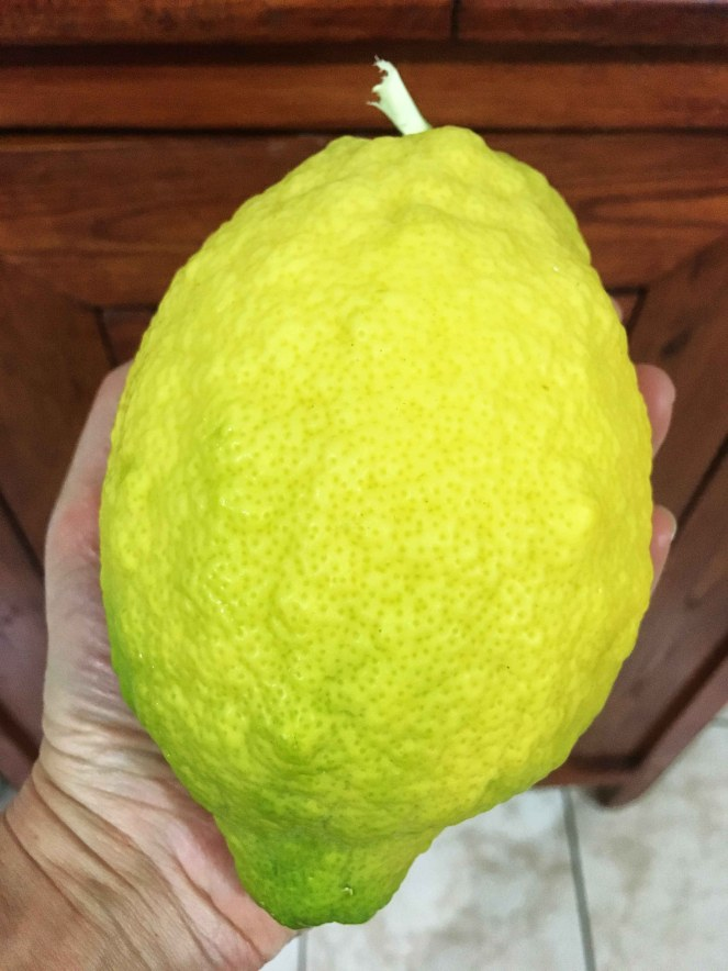 delizia al limone sal de riso (20)