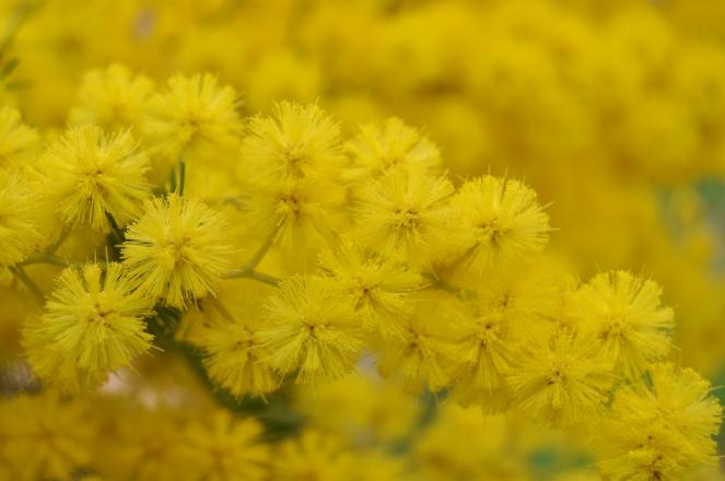 torta mimosa di albumi alla crema al limone (1)